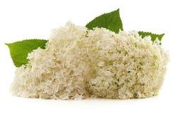 Weiße Blume mit Blättern Lizenzfreies Stockbild