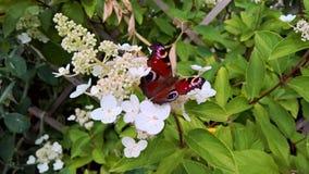 Weiße Blume mit schönem Schmetterling Lizenzfreie Stockfotos