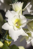Weiße Blume morgens Lizenzfreie Stockfotos
