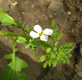 Weiße Blume so schön Stockbilder