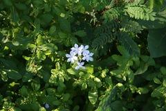 Weiße Blume schön im Park stockfotografie