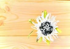 Weiße Blume von foamirana Lizenzfreie Stockfotos
