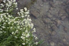 Weiße Blumen über Wasser Lizenzfreies Stockfoto