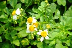 Weiße Blumen Stockbilder