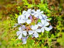 Weiße Blumen lizenzfreies stockfoto