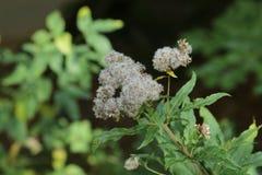 Weiße Blumen Stockfotografie