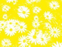 Weiße Blumen als Hintergrund lizenzfreie stockfotografie