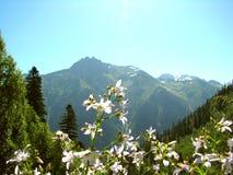 Weiße Blumen auf dem Gebirgshintergrund lizenzfreie stockfotografie