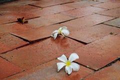 Weiße Blumen auf dem Sonnenbräuneziegelstein lizenzfreies stockfoto