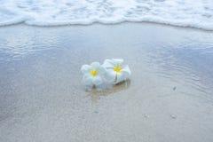 Weiße Blumen auf dem Strand Lizenzfreie Stockfotos
