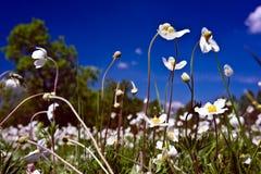 Weiße Blumen auf einem bewölkten Himmel des Hintergrundes lizenzfreies stockfoto