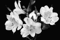 Weiße Blumen auf einem hellen blauen Hintergrund Stockfotos
