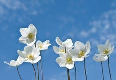 Weiße Blumen auf einem Hintergrundhimmel Stockfotos
