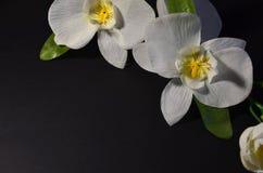 Weiße Blumen auf einem schwarzen Hintergrund stockbild