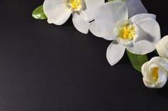 Weiße Blumen auf einem schwarzen Hintergrund stockbilder