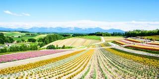 Weiße Blumen auf Himmelhintergrund Lizenzfreie Stockfotos