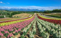 Weiße Blumen auf Himmelhintergrund Lizenzfreies Stockbild