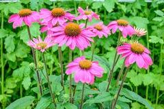Weiße Blumen auf Himmelhintergrund Lizenzfreies Stockfoto