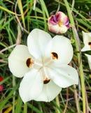 Weiße Blumen auf Himmelhintergrund Stockfotografie