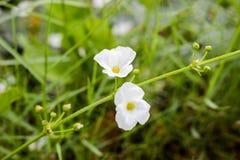 Weiße Blumen auf natürlichem Hintergrund Lizenzfreie Stockbilder