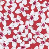 Weiße Blumen auf rotem nahtlosem Hintergrund Lizenzfreie Stockfotografie