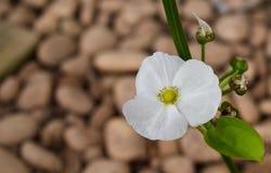 Weiße Blumen aus den Grund Stockbilder