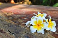 Weiße Blumen aus den hölzernen Grund stockfotos