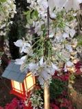 Weiße Blumen an den Gärten durch die Bucht Singapur stockfotos