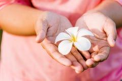 Weiße Blumen in den Herz-förmigen Händen hat einen rosa Hintergrund lizenzfreie stockbilder