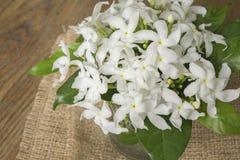 Weiße Blumen in der Glasflasche Stockbilder