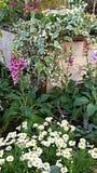 Weiße Blumen der Kirsche und der roten Tulpen Stockbild