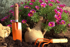 Weiße Blumen der Kirsche und der roten Tulpen Gartenarbeit-Hilfsmittel und Blumen Stockfoto