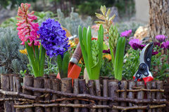 Weiße Blumen der Kirsche und der roten Tulpen Gartenarbeit-Hilfsmittel und Blumen Lizenzfreie Stockfotos