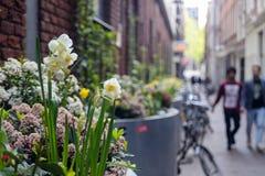 Weiße Blumen in der Stadt Lizenzfreies Stockbild