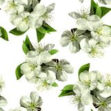 Weiße Blumen des Apfels stockfotografie