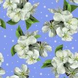 Weiße Blumen des Apfels lizenzfreie stockbilder