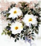 Weiße Blumen des empfindlichen Watercolour lizenzfreie stockfotos