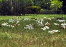 Weiße Blumen, die auf den Boden fielen stockfoto