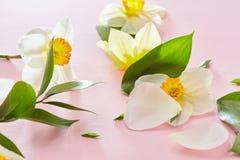 Weiße Blumen, die Hintergrund umfassen Stockfotografie