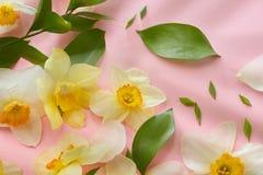 Weiße Blumen, die Hintergrund umfassen Lizenzfreie Stockfotos
