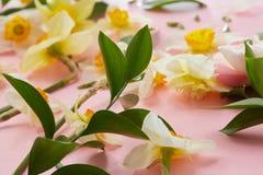 Weiße Blumen, die Hintergrund umfassen Stockfotos