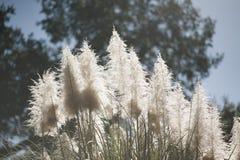 Weiße Blumen, die am Nachmittag blühen lizenzfreie stockbilder