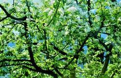 Weiße Blumen E Stockfotografie