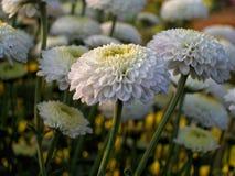 Weiße Blumen in einem Blumenfestival Stockbild