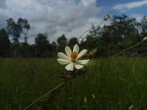 Weiße Blumen exotisch lizenzfreie stockfotos