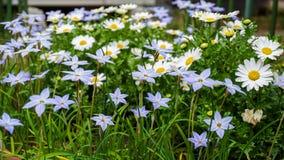 Weiße Blumen ganz über dem Betriebskasten lizenzfreies stockbild