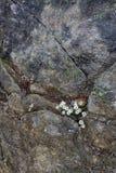 Weiße Blumen in gebrochenem Stein Stockbilder