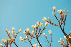 Weiße Blumen getrennt Stockfoto