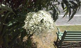 Weiße Blumen, Grünpflanzen und hellgrüne Bank Lizenzfreie Stockfotos