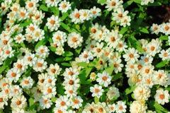 Weiße Blumen-Hintergrund Lizenzfreie Stockbilder